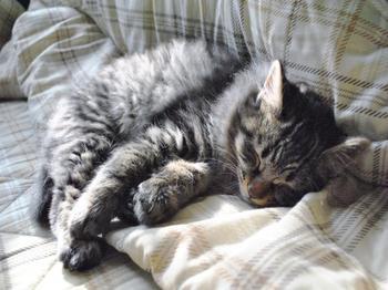 子猫トラ.JPG.jpg