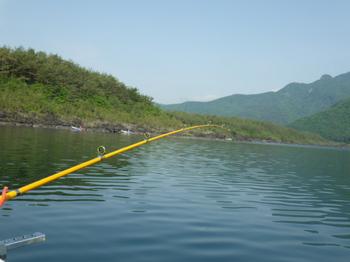 西湖ヒメマス釣り